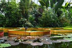 巨型lilli垫 库存图片