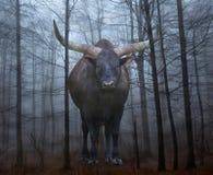 巨型watusi公牛在森林里 免版税图库摄影