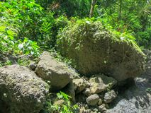 巨大的冰砾在热带雨林狂放的植被和许多美丽的植物中 所有树荫的绿色 令人惊讶的能量 库存照片