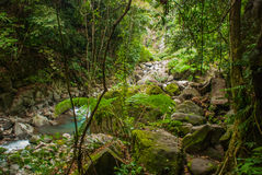 巨大的岩石和一条小河在一个绿色公园 菲律宾 巴伦西亚,海岛内格罗斯岛 库存照片