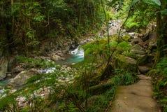 巨大的岩石和一条小河在一个绿色公园 菲律宾 巴伦西亚,海岛内格罗斯岛 免版税库存图片