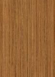 巨大的柚木树纹理木头 库存图片