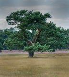 巨大的树和剧烈的天空 库存照片