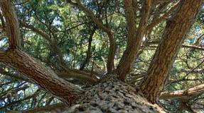 巨大的树底视图 免版税库存照片