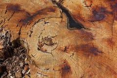 巨大的树桩纹理  库存照片
