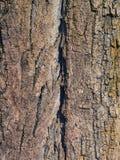 巨大的树皮的好的纹理 图库摄影