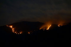 巨大的灌木火 库存图片