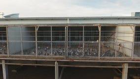 巨大的现代灰色鸡舍上面绵羊和羊羔的畜栏修建了  影视素材