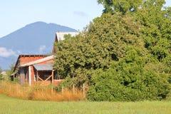 巨大的苹果树在乡区 免版税库存照片