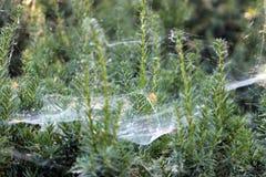 巨大的蜘蛛网 库存图片