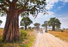 巨大的非洲树和徒步旅行队吉普在坦桑尼亚 免版税库存图片