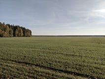 巨大的领域和森林 免版税库存图片