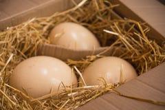 巨大的驼鸟鸡蛋 免版税库存照片