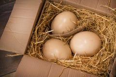 巨大的驼鸟鸡蛋 免版税图库摄影