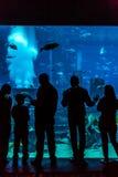 巨大的水族馆在一家旅馆亚特兰提斯里在棕榈群岛上的迪拜 免版税库存照片