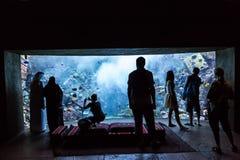 巨大的水族馆在一家旅馆亚特兰提斯里在棕榈群岛上的迪拜 免版税库存图片