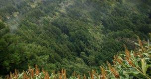 巨大的绿色健康杉木森林鸟瞰图,全景纹理 免版税库存图片