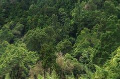 巨大的绿色健康杉木森林鸟瞰图,全景纹理 图库摄影