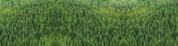 巨大的绿色健康杉木森林鸟瞰图,全景纹理 库存图片