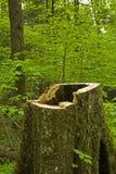 巨大空心mtns发烟性树桩结构树 图库摄影