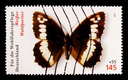 巨大被结合的河鳟Brintesia circe,福利:蝴蝶serie,大约2005年 库存照片