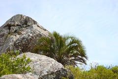 巨石城和一棵棕榈树在小山,乌拉圭的上面 库存照片