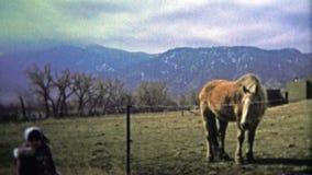 巨石城, CO 美国- 1974年:检查在大农场的小女孩一匹马在一冷颤的天与山麓小丘在背景中 股票录像