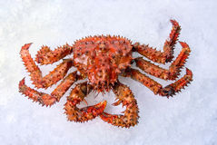 巨蟹 免版税库存图片