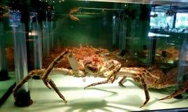 巨蟹 图库摄影