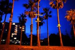 已故的少年非官方的棕榈树纪念品在悉尼 免版税库存图片