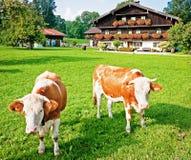 巴伐利亚 图库摄影
