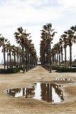 巴伦西亚街道  热带的横向 反射在水中 库存图片