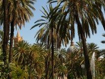 巴勒莫,西西里岛,意大利 有棕榈树的地中海庭院和 库存图片