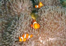巴厘岛下潜 库存图片