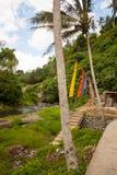 巴厘岛农村河谷风景 免版税图库摄影