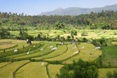 巴厘岛印度尼西亚亲切的米大阳台 图库摄影