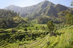 巴厘岛印度尼西亚亲切的米大阳台 免版税库存照片
