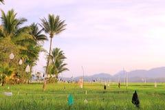 巴厘岛印度尼西亚拍摄了米大阳台 库存图片