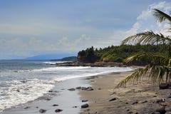 巴厘岛印度尼西亚 由海的海滩有热带植物的 库存图片