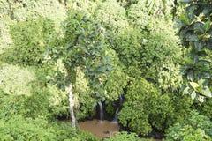 巴厘岛密林有两小瀑布的 库存图片