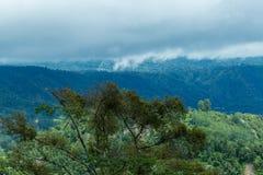巴厘岛密林森林风景Ubud 免版税库存照片