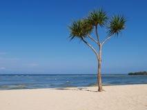巴厘岛海滩好的结构树 免版税库存图片