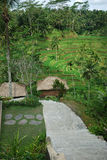 巴厘岛种植园米 免版税库存图片