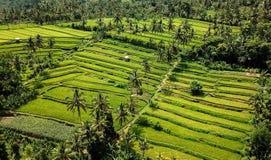 巴厘岛米领域Nort  库存图片