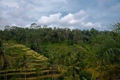 巴厘岛米tegalalang大阳台ubud 免版税图库摄影