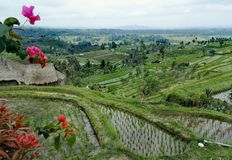 巴厘岛风景 库存照片