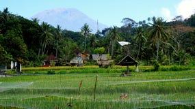 巴厘岛风景 免版税库存照片