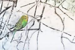 巴厘岛鸟分行印度尼西亚公园鹦鹉 库存照片