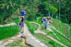 巴厘岛,印度尼西亚- 2017年4月05日:享受与近绿色米大阳台的未认出的人民美好的风景 免版税库存照片