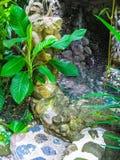 巴厘岛,印度尼西亚- 2012年4月13日:温泉水池看法在Tjampuhan旅馆 免版税库存照片